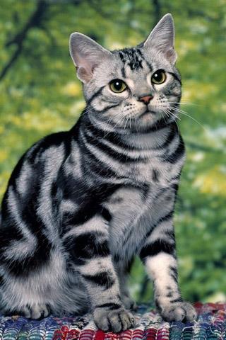 Красивые картинки котиков и кошек на заставку телефона - подборка 7