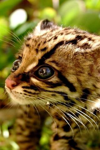 Красивые картинки котиков и кошек на заставку телефона - подборка 8