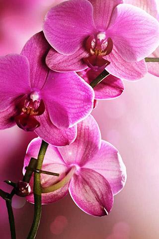 Орхидеи красивые картинки на телефон на заставку - подборка 20 фото 11