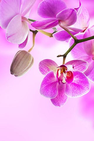 Орхидеи красивые картинки на телефон на заставку - подборка 20 фото 5