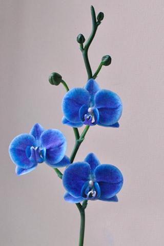 Орхидеи красивые картинки на телефон на заставку - подборка 20 фото 6