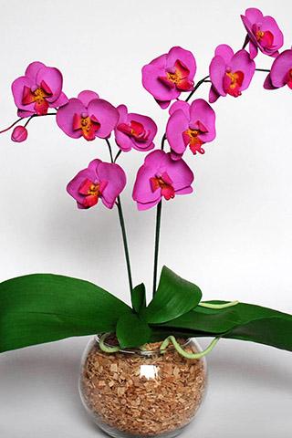 Орхидеи красивые картинки на телефон на заставку - подборка 20 фото 9