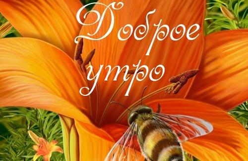 Открытки с пожеланиями доброго утра, хорошего и удачного дня 4