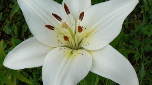 Очень красивые и прекрасные картинки, фото Белая лилия - подборка 6