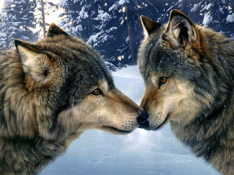 Очень красивые картинки волка и волчицы - подборка изображений 3
