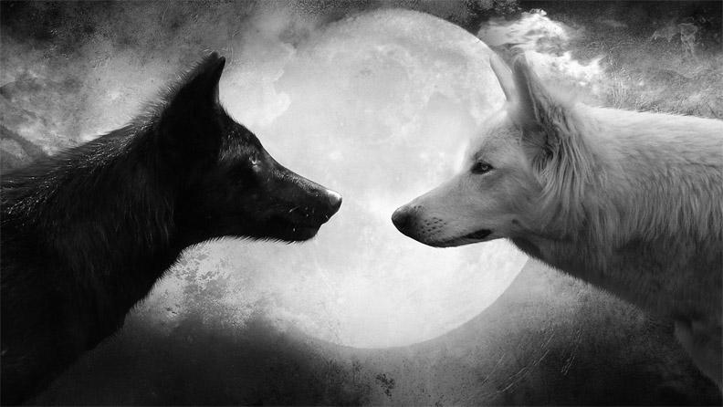 Очень красивые картинки волка и волчицы - подборка изображений 4