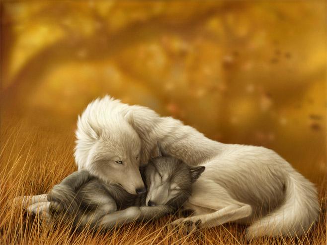 Очень красивые картинки волка и волчицы - подборка изображений 5