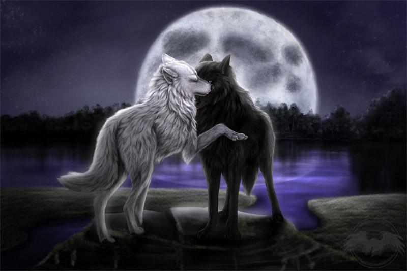 Очень красивые картинки волка и волчицы - подборка изображений 9