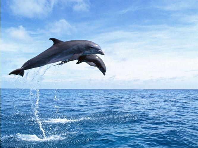 Прикольные и красивые картинки, фото дельфинов в море - подборка 11