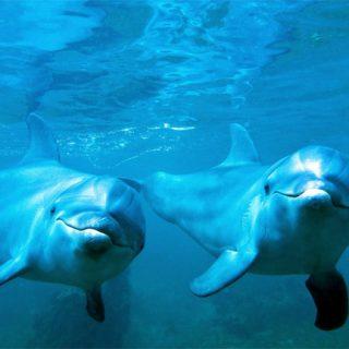 Прикольные и красивые картинки, фото дельфинов в море - подборка 12