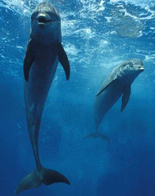 Прикольные и красивые картинки, фото дельфинов в море - подборка 14