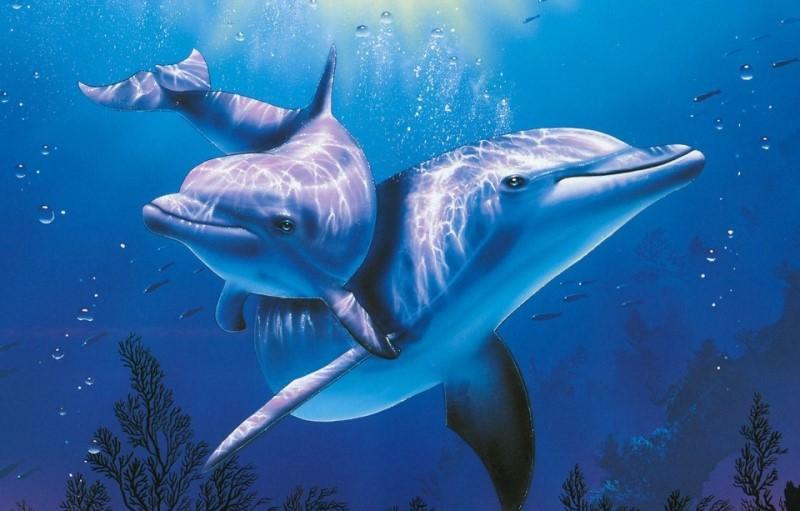Прикольные и красивые картинки, фото дельфинов в море - подборка 2