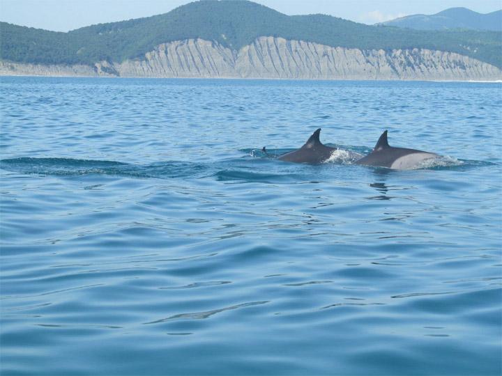 Прикольные и красивые картинки, фото дельфинов в море - подборка 3