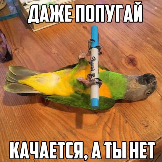 Смешные и прикольные картинки про птиц, птичек, забавная сборка 2