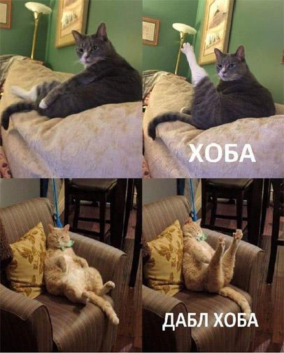 Смешные картинки с надписями для того, чтобы посмеяться - №75 6