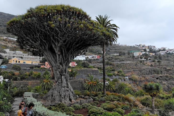 ТОП-8 необычных мест, которые следует посетить на Тенерифе 5