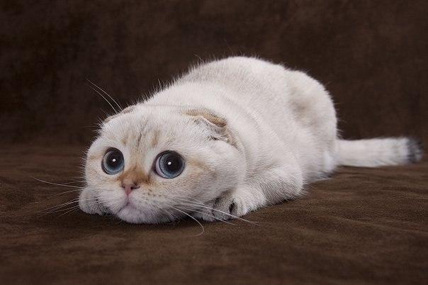 Фото и картинки милых котят и котенков - подборка 2018 11