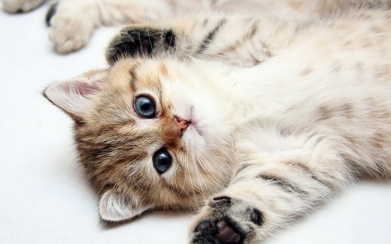 Фото и картинки милых котят и котенков - подборка 2018 3