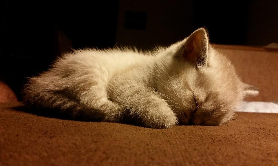 Фото и картинки милых котят и котенков - подборка 2018 6