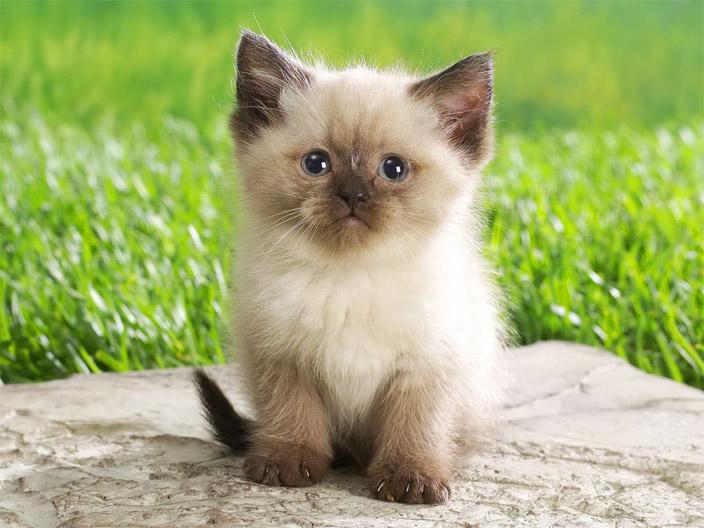 Фото и картинки милых котят и котенков - подборка 2018 7