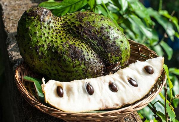 Гуанабана (сметанное яблоко, саусеп) - полезные свойства фрукта 1