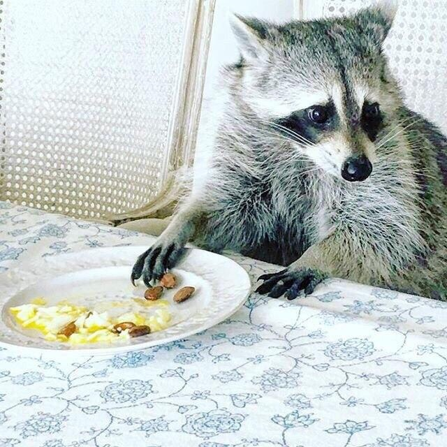 Забавные картинки с животными - очень красивые и смешные 12