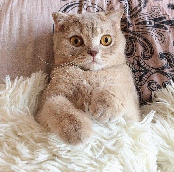 Забавные картинки с животными - очень красивые и смешные 4
