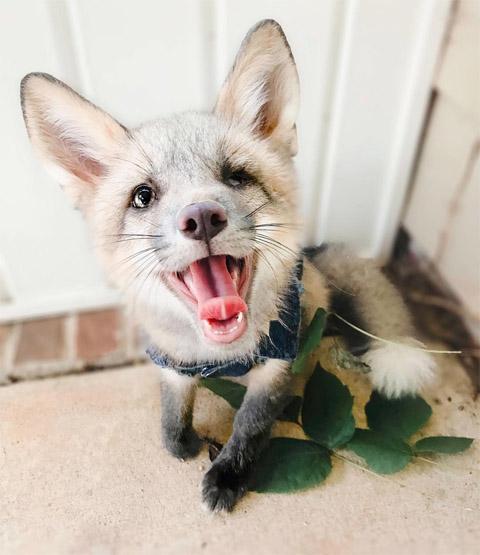 Забавные картинки с животными - очень красивые и смешные 9