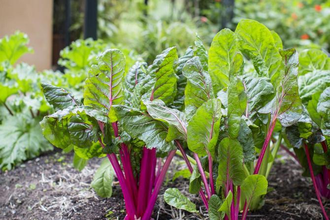 Какие овощи можно сажать в тени - основные секреты и хитрости 1
