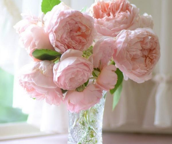 Как сохранить в вазе розы, чтобы они стояли дольше - важные советы 3