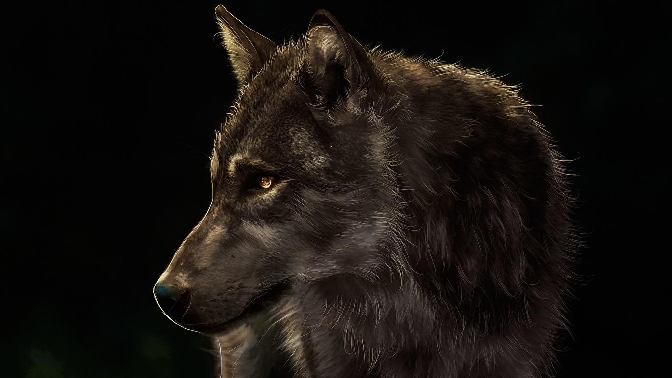Классные картинки на рабочий стол волки, волчица, волк - подборка 10