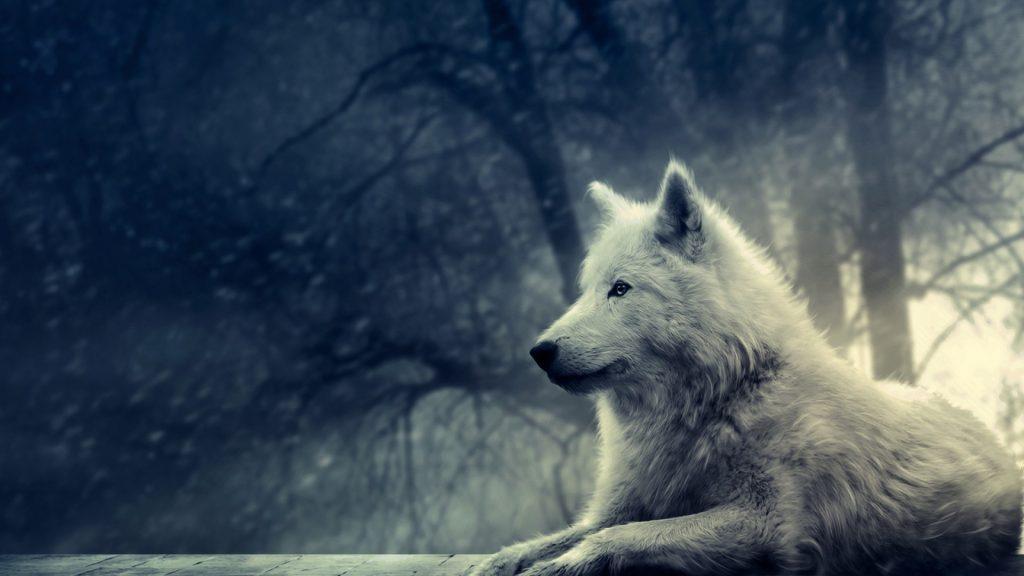 Классные картинки на рабочий стол волки, волчица, волк - подборка 2