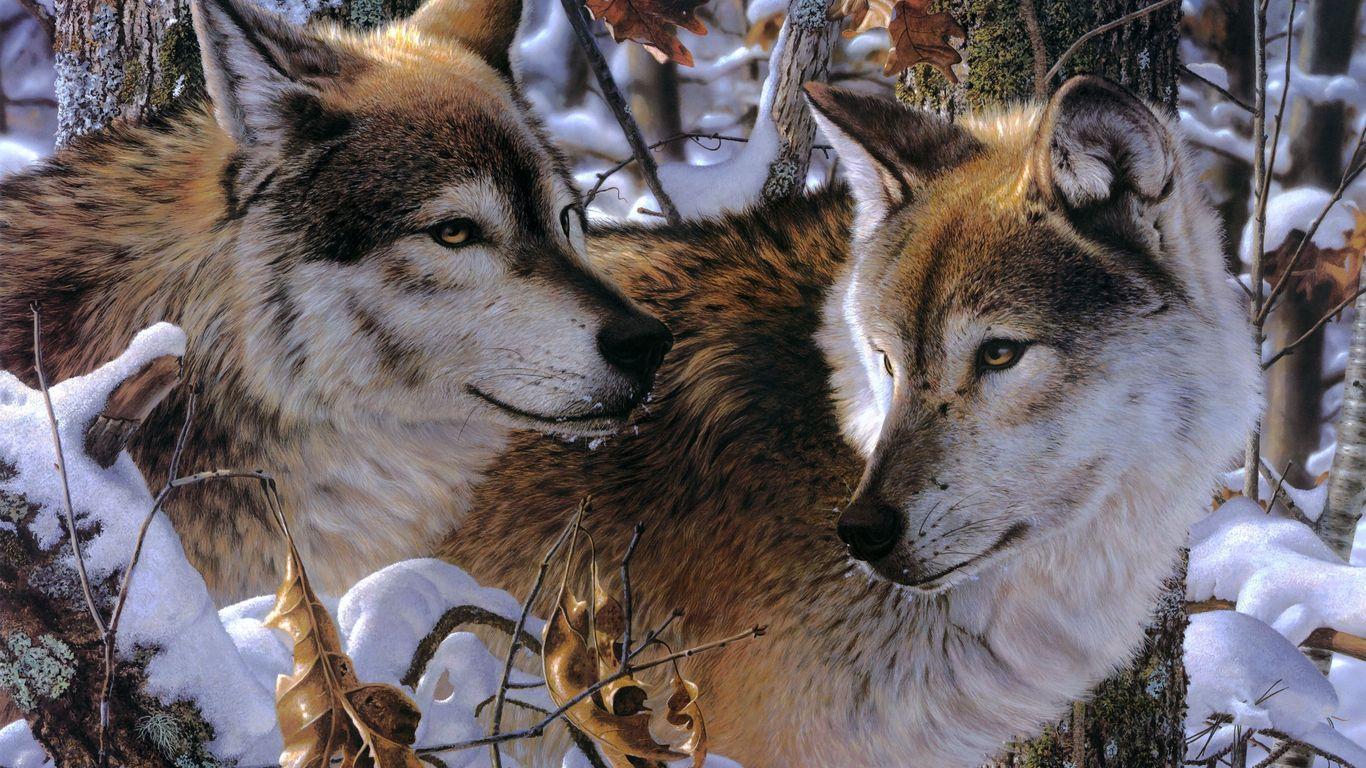Классные картинки на рабочий стол волки, волчица, волк - подборка 3