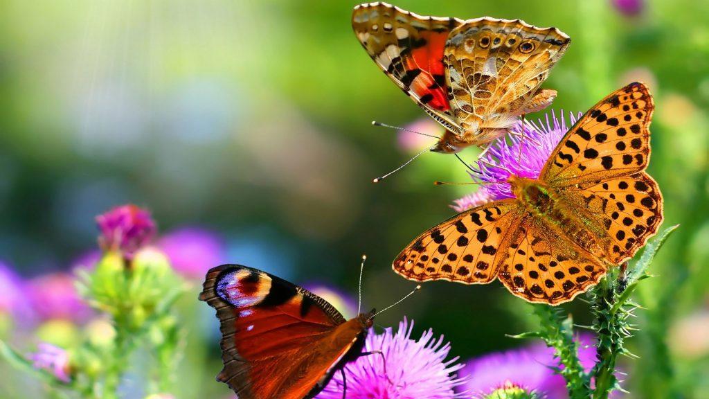 Красивые картинки и обои на рабочий стол Бабочки, Мотыльки 1