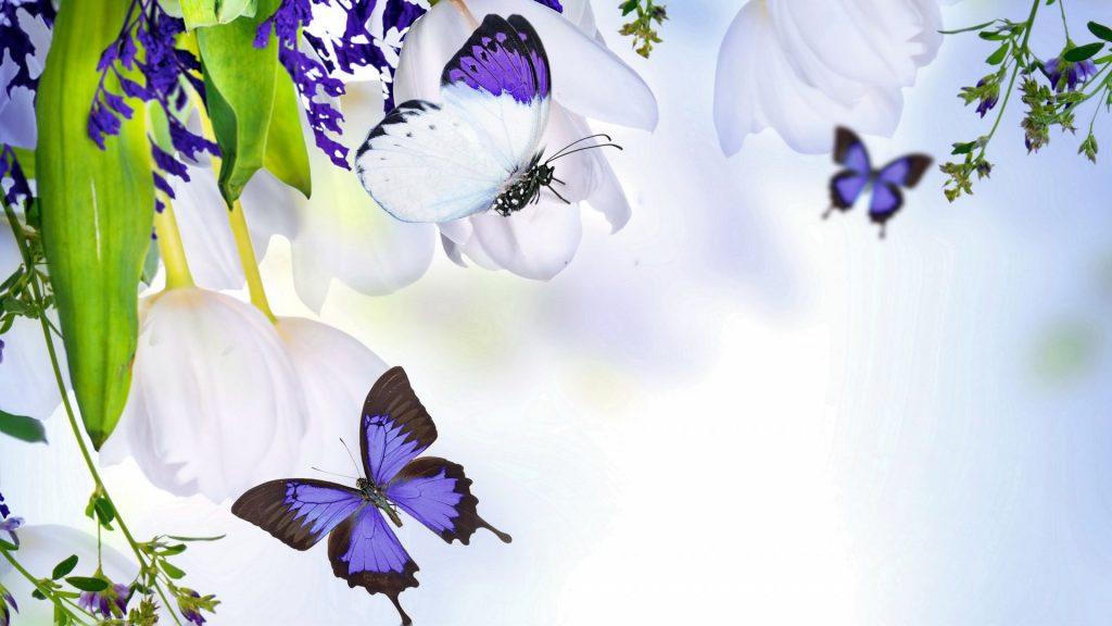 Красивые картинки и обои на рабочий стол Бабочки, Мотыльки 10