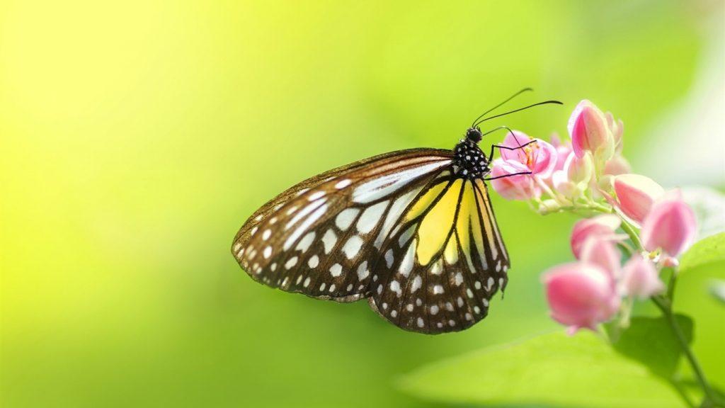 Красивые картинки и обои на рабочий стол Бабочки, Мотыльки 12