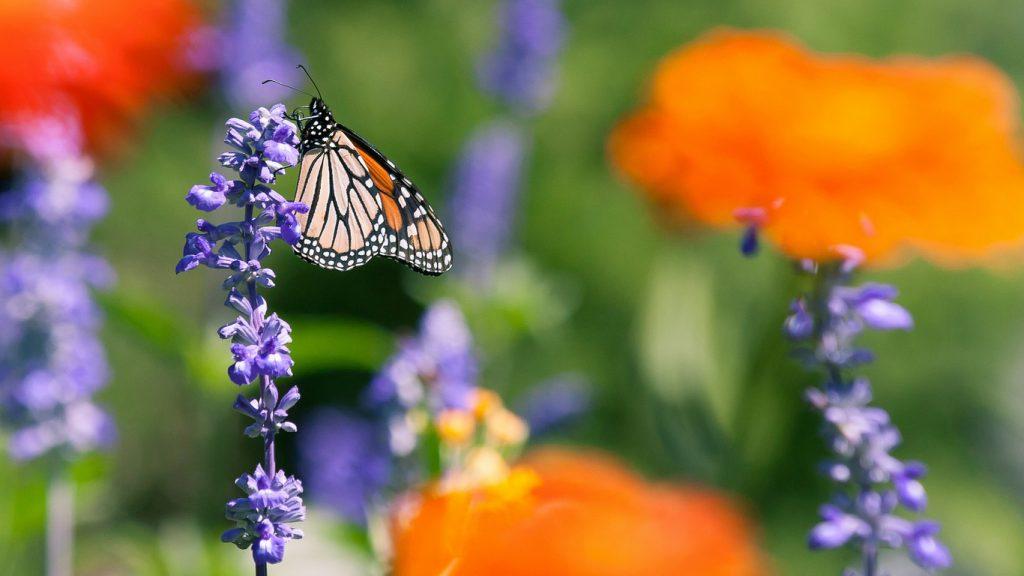 Красивые картинки и обои на рабочий стол Бабочки, Мотыльки 14