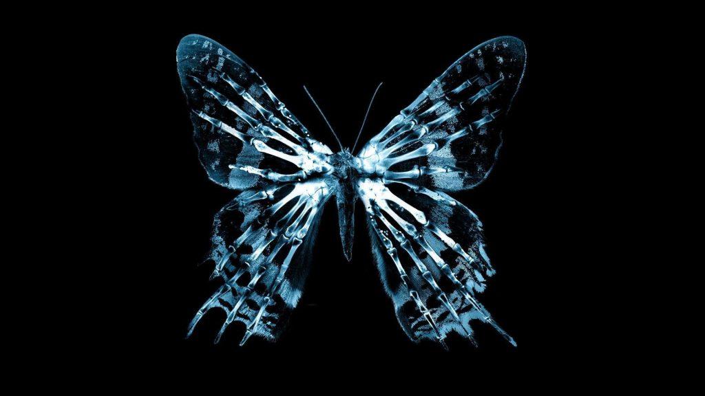 Красивые картинки и обои на рабочий стол Бабочки, Мотыльки 15