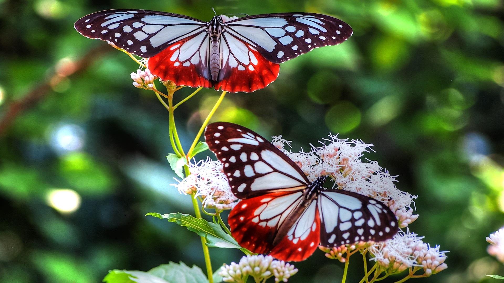 Красивые картинки и обои на рабочий стол Бабочки, Мотыльки 2