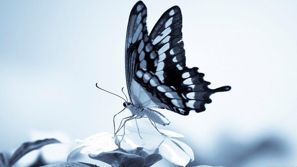 Красивые картинки и обои на рабочий стол Бабочки, Мотыльки 3