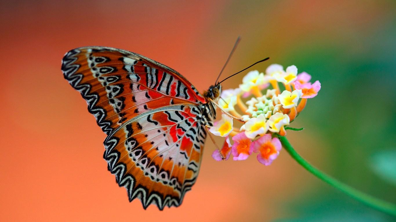 Красивые картинки и обои на рабочий стол Бабочки, Мотыльки 4