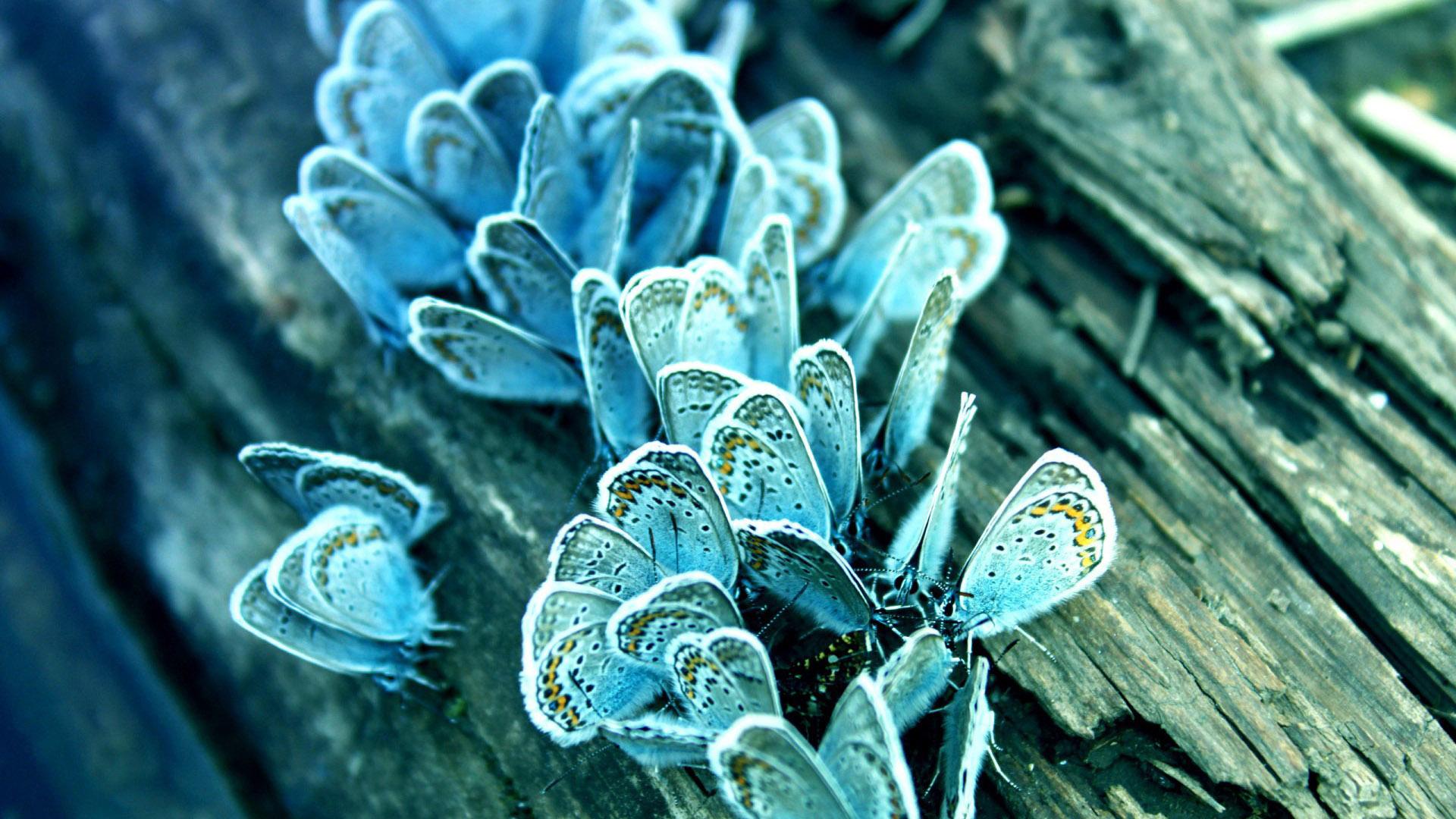 Красивые картинки и обои на рабочий стол Бабочки, Мотыльки 5
