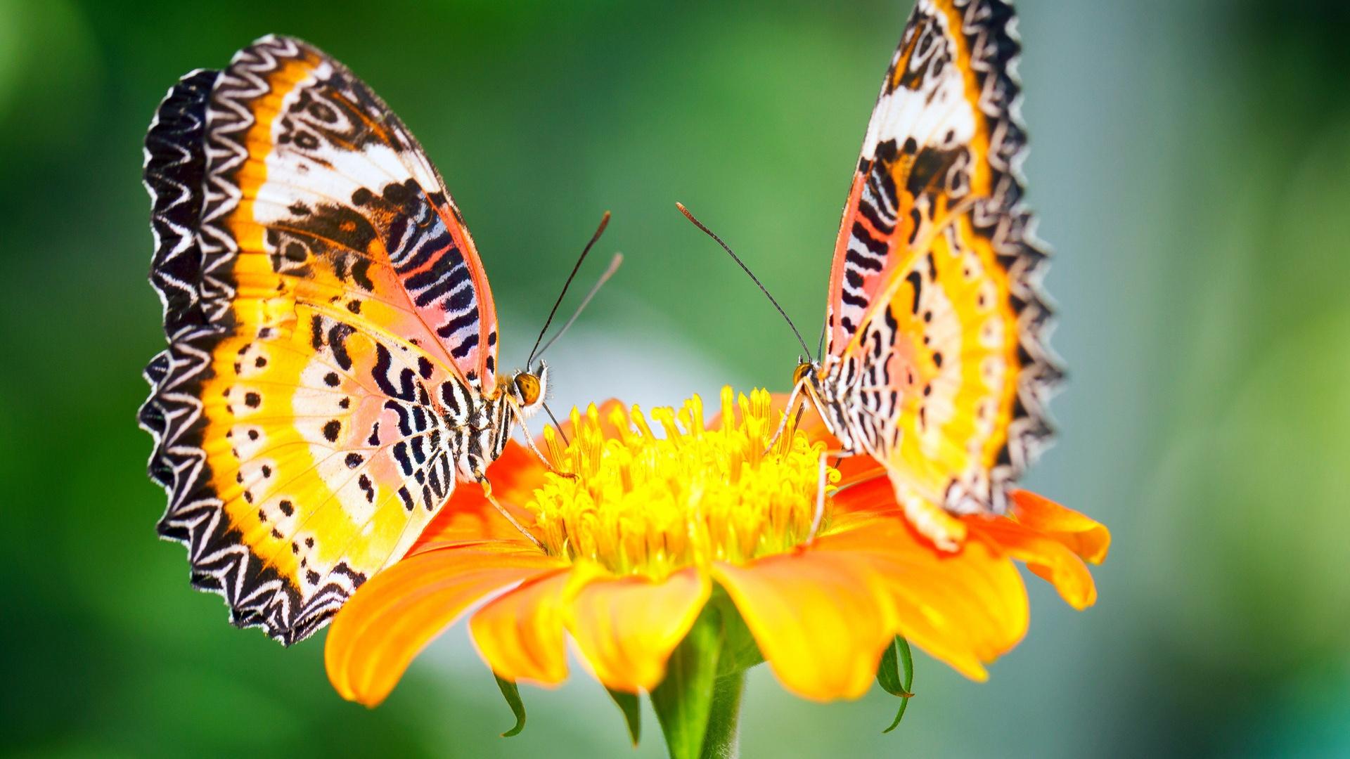 Красивые картинки и обои на рабочий стол Бабочки, Мотыльки 6