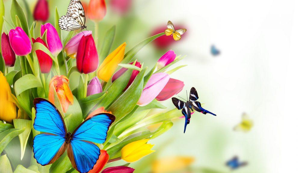 Красивые картинки и обои на рабочий стол Бабочки, Мотыльки 7