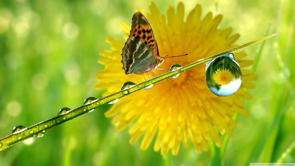 Красивые картинки и обои на рабочий стол Бабочки, Мотыльки 8