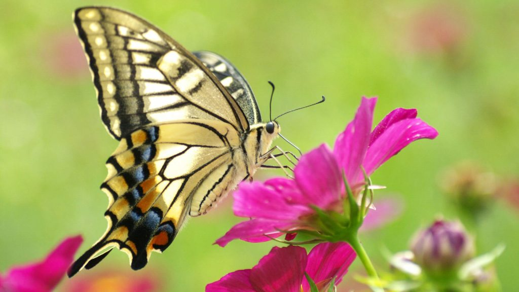 Красивые картинки и обои на рабочий стол Бабочки, Мотыльки 9