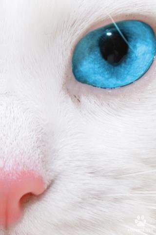 Красивые картинки на телефон глаза, глаза вблизи - подборка 2018 17