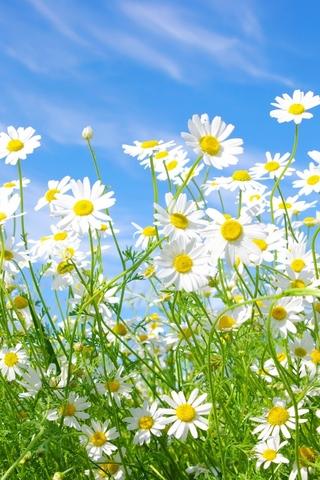 Красивые картинки на телефон лето, пейзажи лета, природа и растения 1