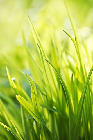 Красивые картинки на телефон лето, пейзажи лета, природа и растения 12