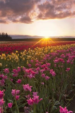Красивые картинки на телефон лето, пейзажи лета, природа и растения 17